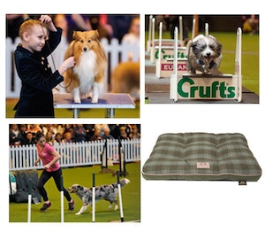 Crufts march