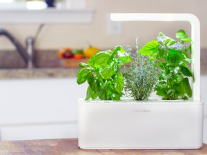Click and grow herb garden giveaway