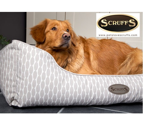 Siesta boxbed scruffs competition