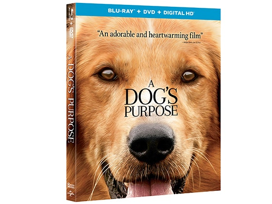 """""""A Dog's Purpose"""" Prize Package sweepstakes"""