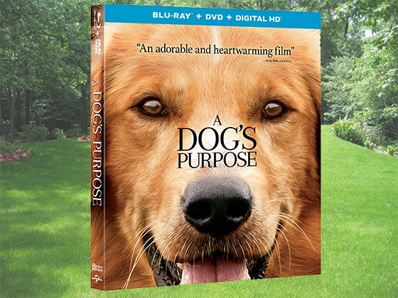 A Dog's Purpose Prize Package sweepstakes