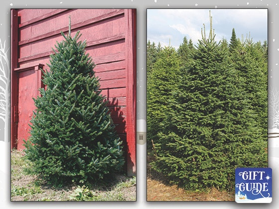 holiday gift guide green valley trees sweepstakes - Live Christmas Tree