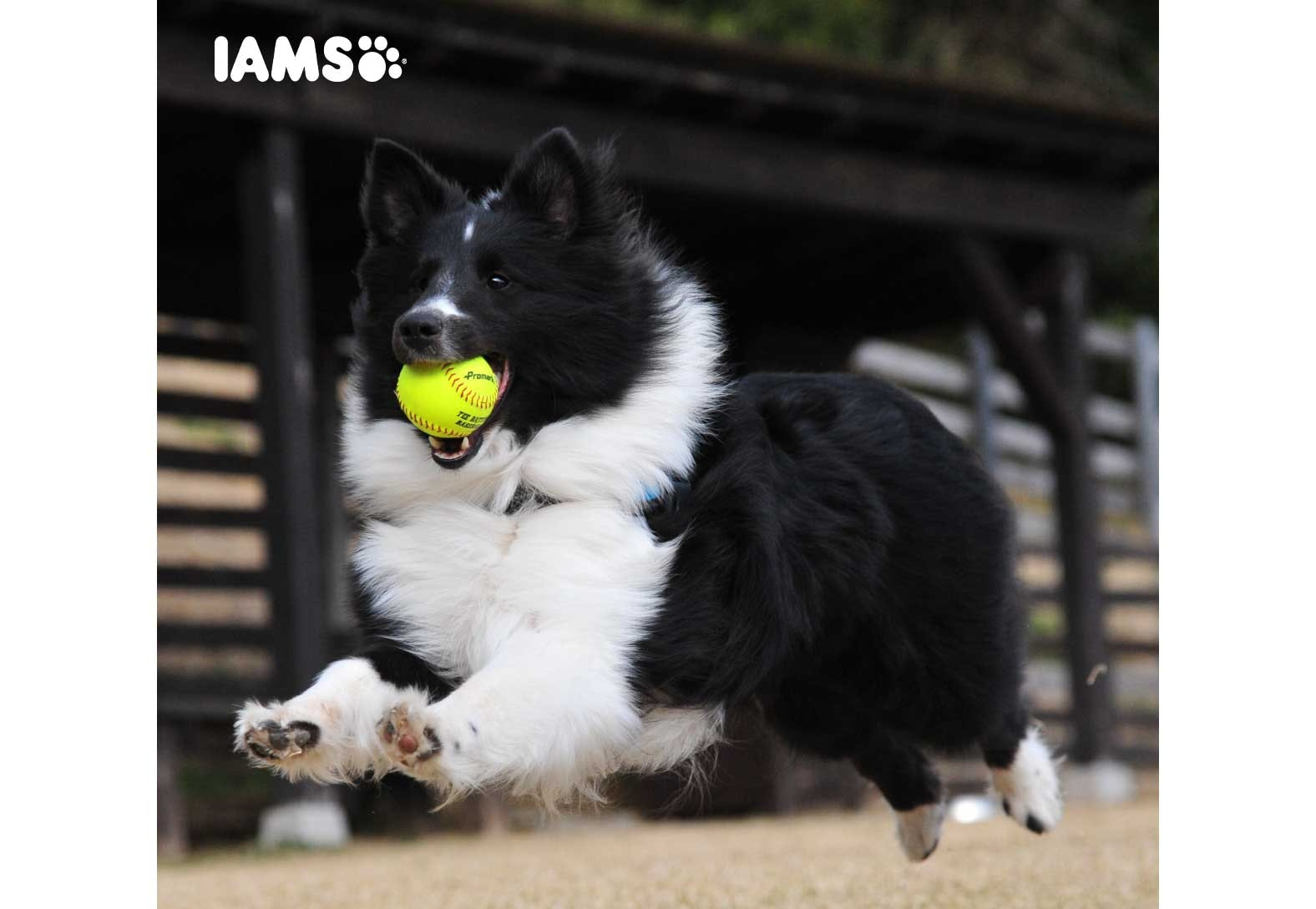 CRUFTS TICKETS  sweepstakes