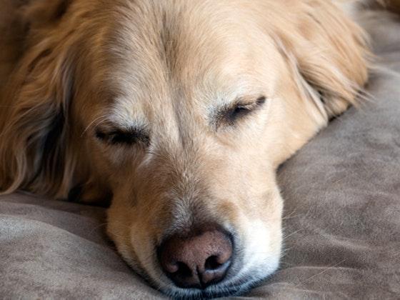 dog bed sweepstakes