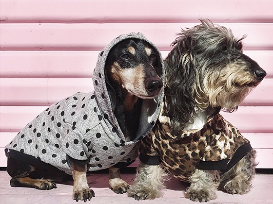 Bean goods doggie clothing giveaway 1