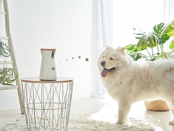 Furbo Hundekamera zu gewinnen! Gewinnspiel