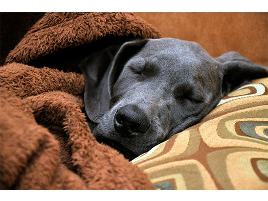 Covered Dog Bed sweepstakes