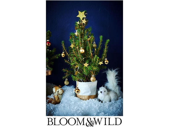 £40 to spend online at Bloom & Wild sweepstakes