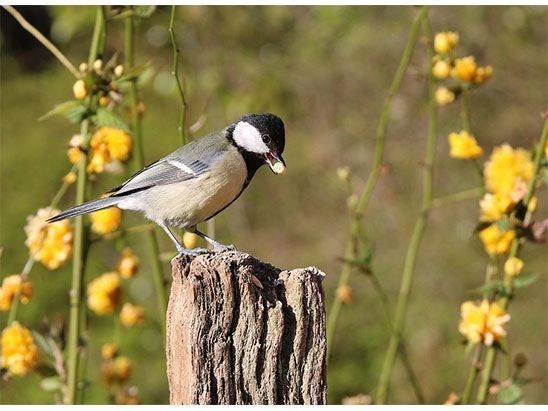 bird feeder sweepstakes