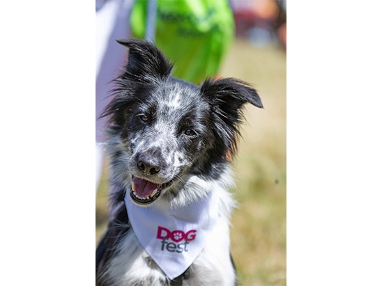 Tickets to DogFest – the ultimate summer festival for dogs! sweepstakes