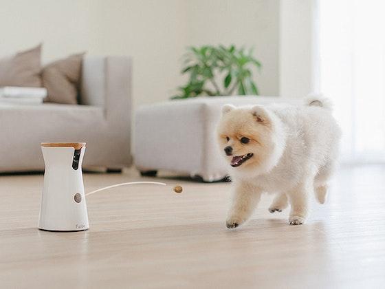 Hundekamera von Furbo Gewinnspiel