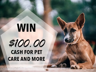$100 Cash Prize June 2019 sweepstakes