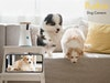 Furbo Hundekamera gewinnen! Gewinnspiel