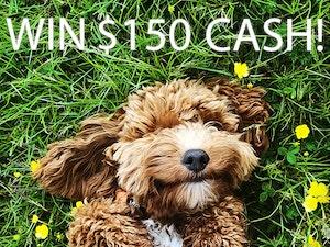 150 cash