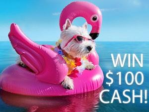 100 cash prize aug