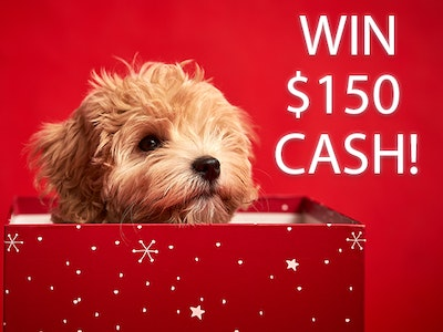 $150 Cash!  sweepstakes