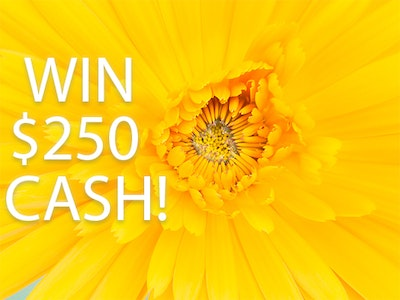 Win $250 Cash!  sweepstakes