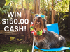 $150.00 Cash!  sweepstakes