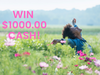 $1000.00 Cash!  sweepstakes