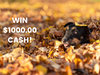 $1,000.00 Cash!  sweepstakes