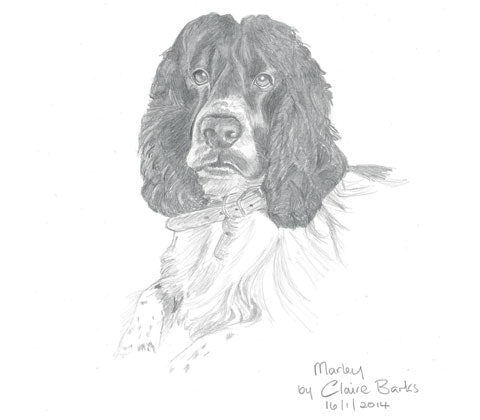 Debbie s dog cropped 2