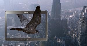 Falcon landscape
