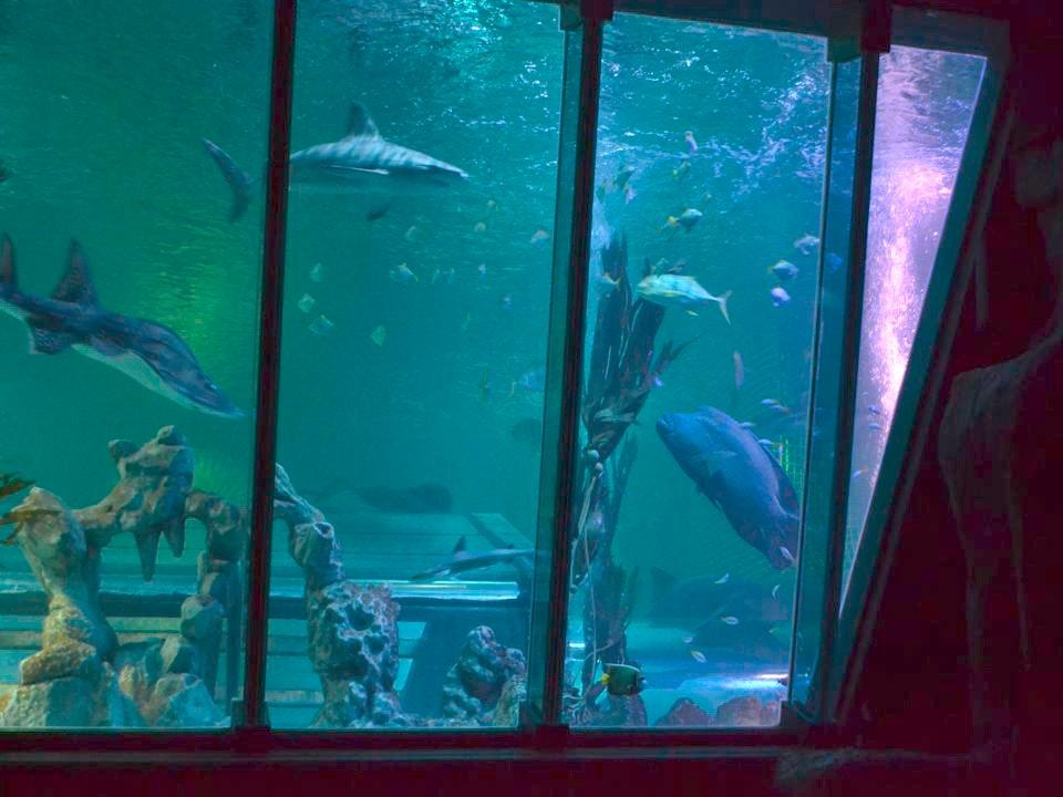 Ocean tank blackpool sealife chris brown
