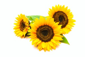 Shutterstock 221626234