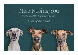 Nice nosing you final